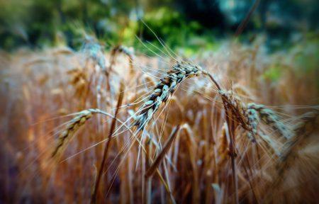 Българска асоциация на търговците на зърно и фуражи